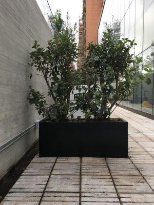 Jardinera Con Viburnum Mascantha